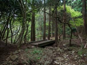 izu-forest-masanori-sugiura-1-6
